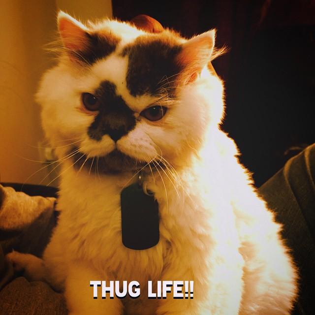 Pixel_Thug_Life